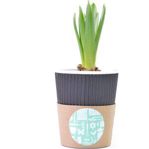 Garden Cup- MCK Promotions